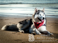 Dog photoshoot on the beach